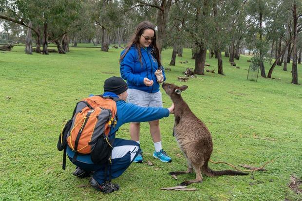 More Kangaroos!